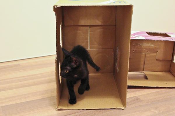 DIY簡易紙箱遊戲貓屋